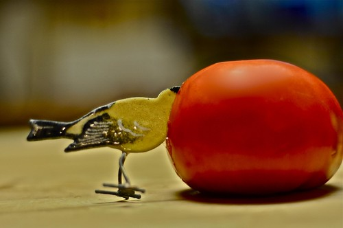 Bird Stuck in a Tomato