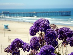 Pismo Beach, CA (mrvanessarose) Tags: travel flowers summer beach cali coast pacific roadtrip clueless bluffs pismobeach centralcalifornia visitca
