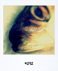 "#Dailypolaroid of 8-7-13 #292 • <a style=""font-size:0.8em;"" href=""http://www.flickr.com/photos/47939785@N05/9265898404/"" target=""_blank"">View on Flickr</a>"