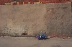 - (Gdns.) Tags: uk artist photographer ventnor isle wight chrisjones 2013 chemicalgdns
