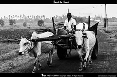 Back to Home @ kallanai (Thulasidasan TD) Tags: blackandwhite transportation farmer trichy kallanai t127photography nikond5100photography grantanicut windseason