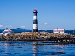 Lighthouse with sea lions (wycombiensian) Tags: