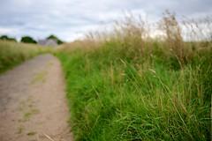House (kokeshidol) Tags: sea beach grass sand nikon dof path northumberland 28 wideopen d600 embleton newtonbythesea