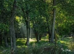 sunray092513 (Tim @ Photovisions) Tags: trees nebraska adams beatrice lightrays godray