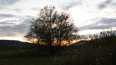 backlight tree (ΞSSΞ®®Ξ) Tags: pentax k5 ξssξ®®ξ