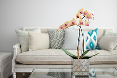 (*Peanut (Lauren)) Tags: blue orchid home linen pale neutral