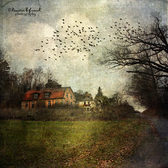 .. a cloudy day .. (Kerstin Frank art) Tags: autumn trees houses sky cloud texture home leaves birds buildings cloudy kerstinfrankart vision:sunset=0597 vision:mountain=0669 vision:sky=0869 vision:plant=0659 vision:outdoor=0787 vision:clouds=0803