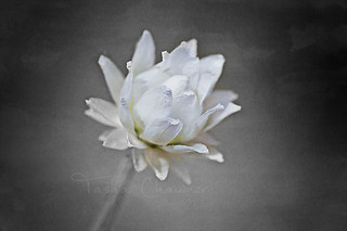 White Flower Watercolour