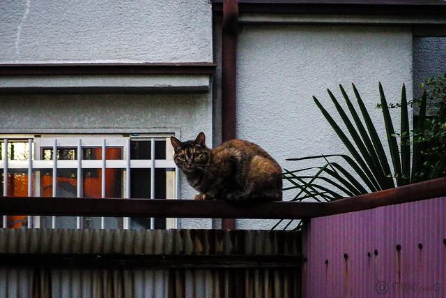 Today's Cat@2013-11-17