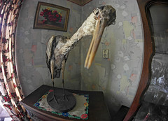 (Fish) Eyes out on storks (Martyn.Smith.) Tags: camera abandoned lens photo scary woods flickr image decay eerie creepy taxidermy fisheye 8mm maison derelict abandonment urbanexploring ue urbex stuffedbird samyang giantpecker spookyhouses samsungnx abandonedmanorhouse samsungnx1000 vision:text=056 creepymanorhouse