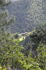 Paysage Cévenol