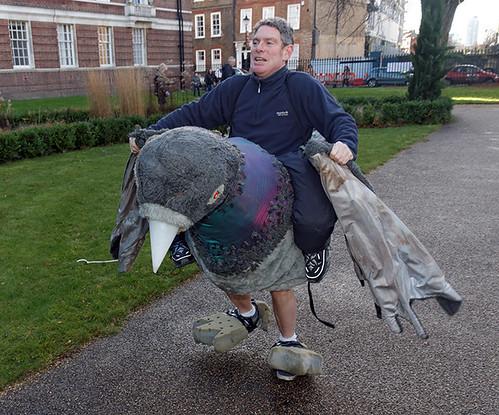 Prancing pigeon