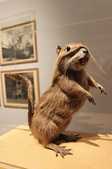 Göteborgs konstmuseum - Wolpertinger #4