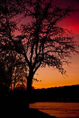 Bord de Seine  Hricy (TARTUFLO) Tags: nature canon ciel lumiere arbre couleur couchant fleuve lr3 cokin trepied canoneos5dmarkii canonef24105f4