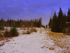 A hint of snow. (Yolanta Z) Tags: stagathe