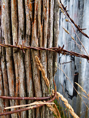 Rust-ic (Steve Taylor (Photography)) Tags: grass fence wire rust iron post farm country weathered barbed corrugated corrgated vision:text=0607 vision:outdoor=0793