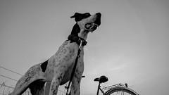 hund (thbobsde) Tags: hund holstein weis