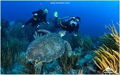 February 5, 2014 09:07 AM (Ocean Explorers St. Maarten) Tags: borderfx