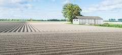 Newly seeded potatoes in ridges (RuudMorijn) Tags: old blue summer sky food brown sunlight building tree texture nature dutch field lines barn rural vintage landscape outdoors countryside spring europe blauw pattern view natural earth farm country fa