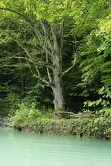 Rhne ( Fluss - River ) bei ... im Kanton Genf - Genve in der Schweiz (chrchr_75) Tags: water juni river schweiz switzerland wasser suisse swiss rhne christoph svizzera fluss rhone 2014 suissa 1406 chrigu chrchr hurni chrchr75 chriguhurni chriguhurnibluemailch juni2014 albumrhne hurni140603 albumrhone albumrhneflussriver