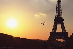 Eiffel Tower at sunset (Damien Graham ) Tags: sunset mars paris france bird tower de soleil tour coucher damien eiffel graham champ coucherdesoleil