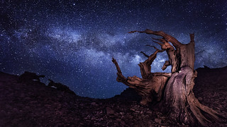 The Tempest | Bristlecone Pines, California