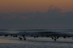 Birdy Beach (Costigano) Tags: water sea ocean irishsea beach birds dawn morning sunrise wave