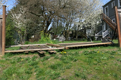 Location: Capitol Hill (Blinking Charlie (tanned, rested, and ready)) Tags: capitolhill seattle washingtonstate usa spring plankfence fallen knockedover backyard eolivestreet canonpowershots110 lawn 2016