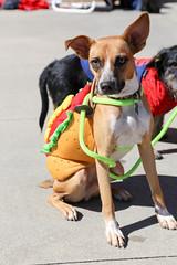 rogo-5744 (angelsrescue) Tags: aau pets angels among us pet rescue alpharetta ga dog love