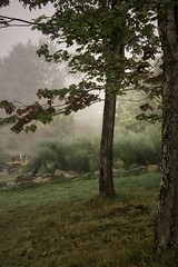 160924_091 On a foggy morning (MiFleur...Thanks for visiting!) Tags: tree fall autumn arbre fog brouillard