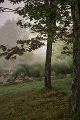 160924_091 On a foggy morning (MiFleur...Thank You for 2 Million Views) Tags: tree fall autumn arbre fog brouillard
