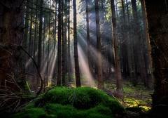 Rays (dannicamra) Tags: nikon d5100 germany bavaria forest woods landscape nature trees sun rays wald bayern landschaft sonnenstrahlen baum natur green autumn herbst