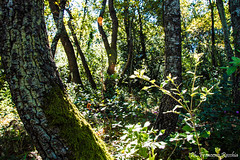 09102016-_DSC0099 (Franzberserk) Tags: boscosantautuono mottola natura puglia taranto alberi bosco italia macchiamediterranea muschio nikon nikon3200 verde
