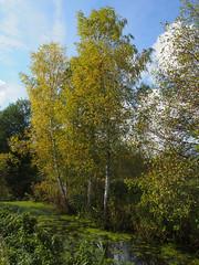 Herbst macht Fortschritte-bw_20161007_070098.jpg (Barbara Walzer) Tags: 071016 blätter bunt bäume farbe herbst natur wald blã¤tter bã¤ume