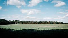 (frollein2007) Tags: wolletz uckermark herbst wald landschaft hach altweibersommer feld wirdbaldkalt hoherhimmel