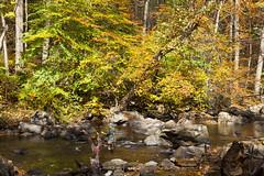IMG_8302 (Joseph W. Stampfl) Tags: ken lockwood gorge fly fishing flyfishing fall raritan river south branch high bridge canon 5d 2470 nature trout flygear