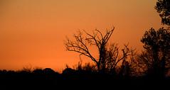 So very quiet... (tomk630) Tags: virginia nature quiet dawn darklight color trees usa rural beauty
