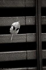 sur le mur du MAC, Cit Internationale de Lyon, 69002. (Pascal Rey Photographies) Tags: lyon lugdunum linux arturbain abstraction abstractionphotographiecontemporaine abstract abstraite urbaines underground urbain ubuntu opensource popart pop freesoftware valledurhne