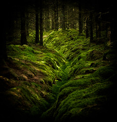 the dark woods (Mr_Souter) Tags: autumn scotland woods september lochruskie 2013 green dark europe uk places