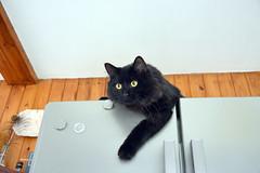 Vas'ka on the fridge (Caulker) Tags:
