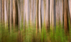 ICM (Crouchy69) Tags: sunrise dawn landscape boranup karri forest tree trees icm intentional camera movement western australia