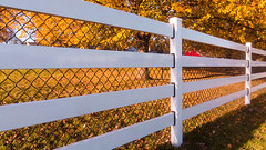Fall Fence Line (VBuckley.com) Tags: fence whitefence whitefencefarm buckleyfence fall autumn outdoor illinois chicagoland midwest sunset leaves yellowleaves pettingzoo yellow fenceline