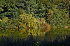 HerbstStillLeben (Michael Döring) Tags: gelsenkirchen buer bergersee herbststillleben goldeneroktober afs105mm14e d800 michaeldöring