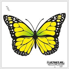 Natural Area Speckled Butterfly Woods and loneliness kpnk mesi v tklik . #eq Dark Cloud - Rainbow Butterfly  Pararge aegeria ( Linnaeus, 758 ) . #kpnk tsiri . . biz ikimiz... iki mthi hasret iki para can... .  77    . . # (okaykamaci) Tags:  aztagram kedi pyaar dovan zdeyi kpnk aforizm eq aydin neela