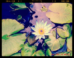 Waterlily Beauty (Stanley Zimny (Thank You for 21 Million views)) Tags: flower flowers green garden nature botanical water lilly blue superbmasterpiece ilovenature naturesfinest coolest