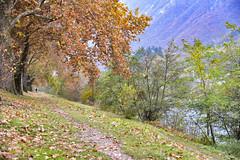 La sponda destra dell'Adige (Renato Pizzutti) Tags: trentinoaltoadige trento passeggiata spondadelfiume adige autunno novembre nikond750 renatopizzutti