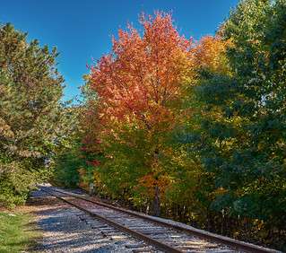 Leaves along the line