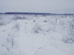 field (Gjabu) Tags:      nature autumn snow landscape    field freedom horizon