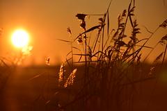 A perfect world (Pics4life.nl) Tags: december warm sunset sunlight grass golden nikon sigma sun winterlight dof