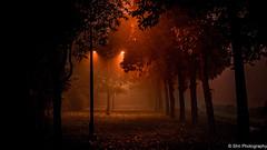 A Walk in the Heaven... (sssnanal) Tags: nikontop nikonlens nikonworld nikomea nikon nikonlandscapes landscapes dusk trees autumn